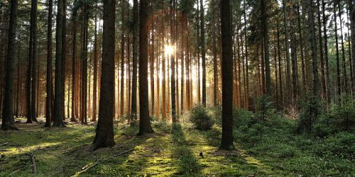 Buchtipp: Best of Wald