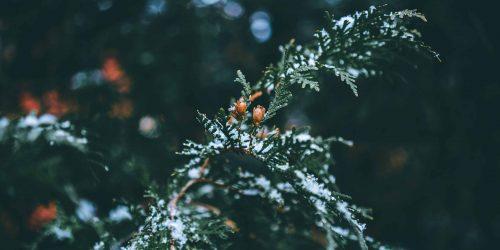 Weihnachtszauber in der Region